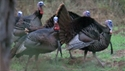 https://media-oc.akamaized.net/outdoorchannel/942/143/TeamTrophyQuest_Turkey_2011_TurkeyHunt_125x71_2060701302_125x71.jpg